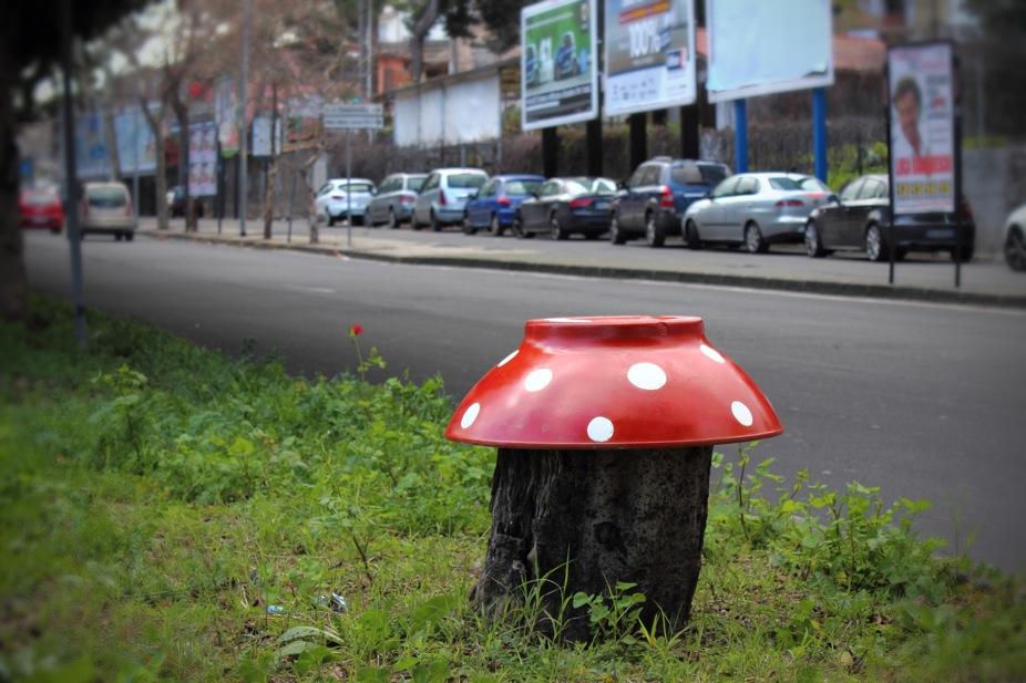 """Cute little mushrooms"" / ""Funghetti"""