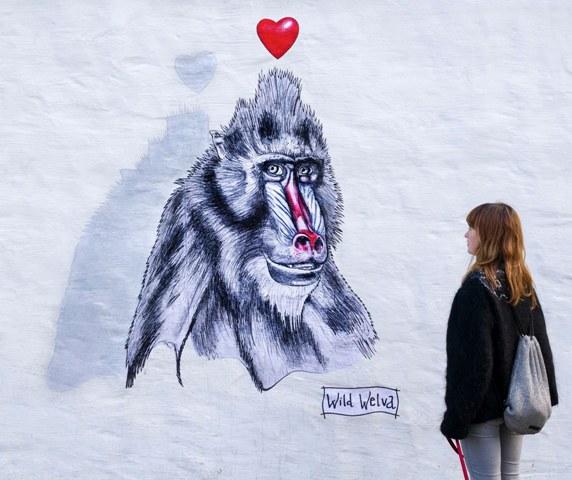 Wild Welva in Reykjavík, Iceland.