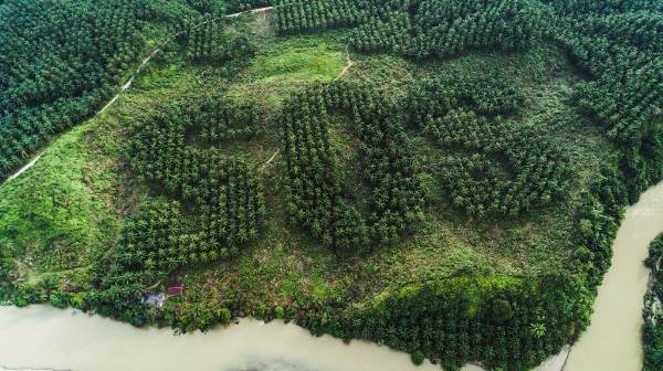 Sumatra SOS carved landscape on oil palm plantation
